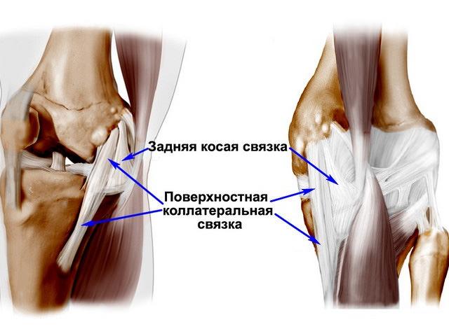 Боковые сухожилия