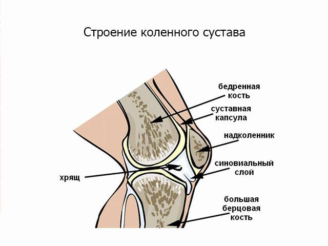 Изображение - Что делать при ушибе коленного сустава ushib-kolena-2