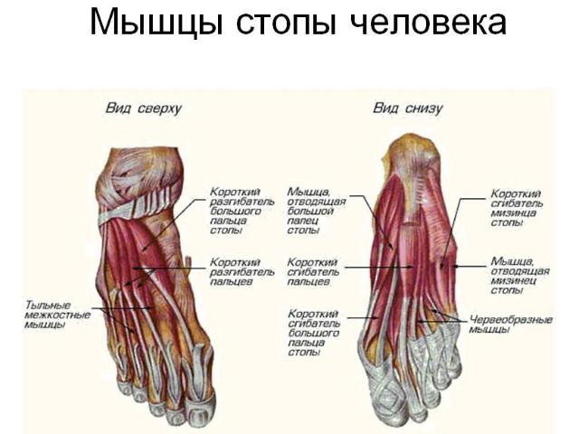 признаки ушиба стопы ноги