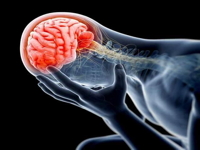 Мозг в голове
