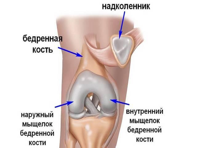 Строение средней части ноги