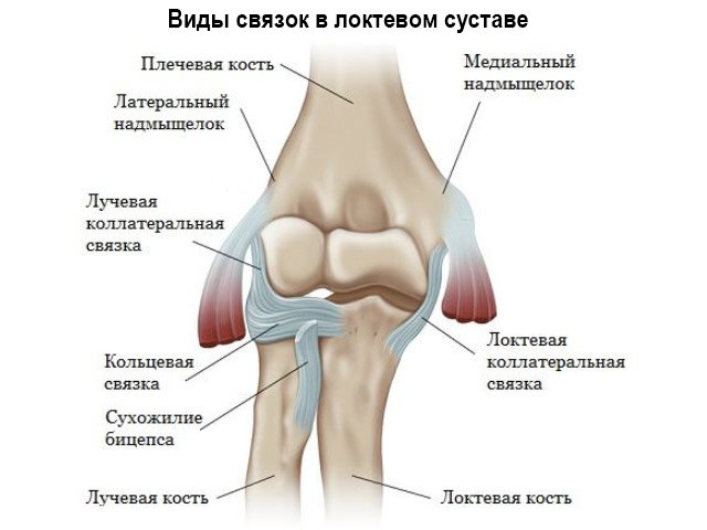 Здоровые сухожилия