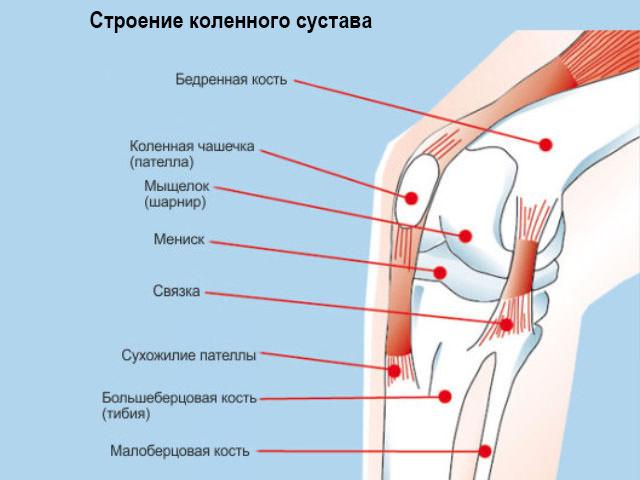 Устройство колена