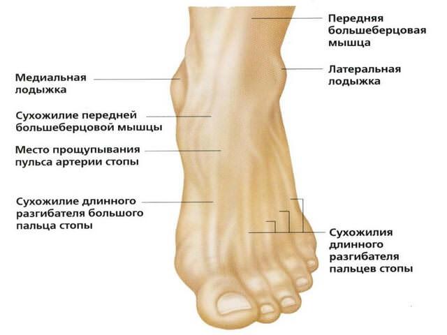 Травма латеральной лодыжки