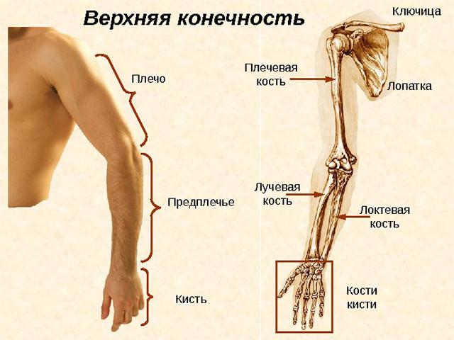 Guahoo одна какие упражнения при переломе предплечья лучевой кости белье стоит