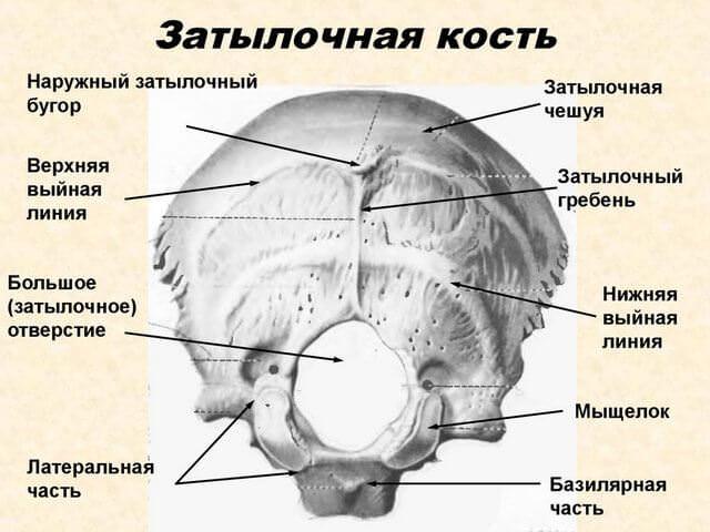 Перелом затылочной кости