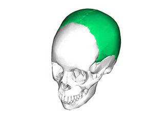Схема головы