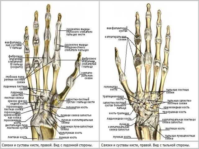 Левая и правая рука