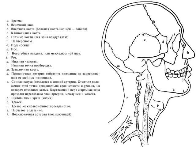 Кости в черепе