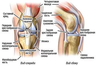 Крестовые связки колена